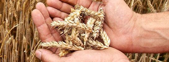 Kundenreferenz Stroetmann, Hände halten Saatgut